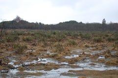 Sumpfiges Feld im neuen Wald Lizenzfreie Stockfotografie
