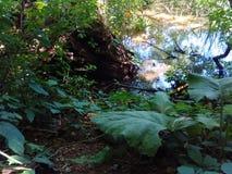 sumpfland Stockbild