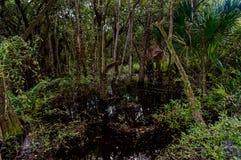 Sumpfland Stockfoto