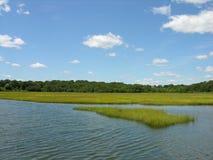 Sumpfland auf der Seeküste stockbilder