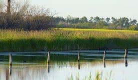 Sumpfland mit Beiträgen stockfotografie