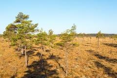 Sumpflandschaft Stockfotografie