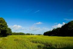 Sumpfländer Lizenzfreies Stockbild