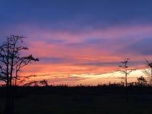 Sumpfsonnenuntergänge im Louisiana-Sumpf Stockfotografie