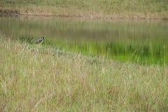 Sumpfvögel lizenzfreie stockfotografie