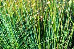 Sumpfvegetationsabschluß oben mit Grasbiegungen und -laub stockfoto