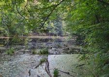 Sumpfwald Lizenzfreies Stockbild