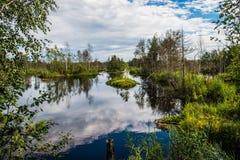Sumpfwald Lizenzfreie Stockfotos