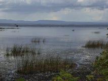 Sumpfwasser Stockfoto