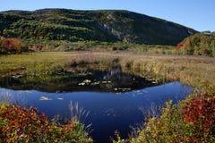 sumpigt nationalparkdamm för acadia Arkivbilder