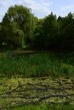 Sumpigt våtmarklandskap med pilar, rottingen och andra vattenväxter under vårsäsong i Centraleuropa Royaltyfria Foton