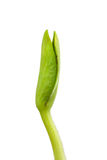 Sumpkin seedling Stock Photos