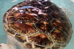 Sumpsköldpaddalantgård, för underhållet av befolkningen royaltyfria bilder