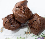 Sumptuous Gluten Free Brownies. View is at a forty five degree angle looking down Royalty Free Stock Images