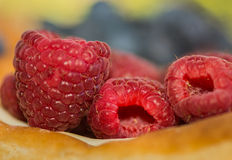 Sumptuous Raspberries Fill A Golden Danish Pastry. Blue And Green Fill Up The Background Stock Photography