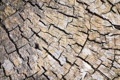 Sumário da natureza do coto da madeira lançada à costa Imagens de Stock