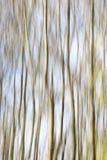 Sumário das árvores Fotos de Stock Royalty Free
