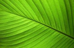 Sumário do close-up do fundo verde da natureza da folha Foto de Stock