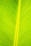 Sumário em folha de palmeira no fim acima Fotografia de Stock Royalty Free