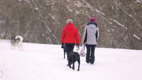 SUMY, UKRAINE - FEB 18, 2018: Backs of two middle-aged women in jackets and three dogs on a winter walk. Snow-covered park stock video