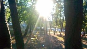 Sun à madeira Fotografia de Stock Royalty Free