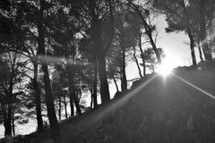 Sun a éclaté par la forêt photos stock