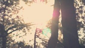 Sun évase par des arbres dans la forêt banque de vidéos