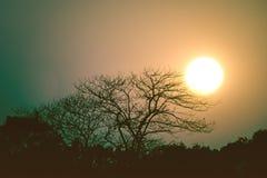 The Sun över torrt träd Arkivfoton
