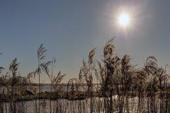 Sun über dem See Lizenzfreie Stockfotos