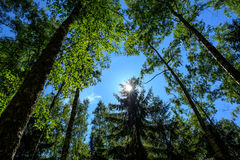 Sun über den Bäumen Lizenzfreies Stockfoto
