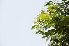 Sun über grünen Palmblättern Lizenzfreies Stockfoto