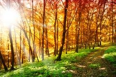 Sun в пуще осени стоковые фотографии rf