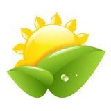 Sun и листья Стоковые Изображения RF