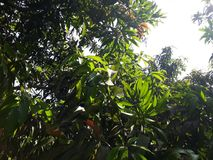 sun& x27; 许多树s光芒  免版税库存照片