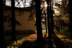 sun's光芒通过树发光 免版税图库摄影