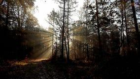Sun Fotografia de Stock Royalty Free