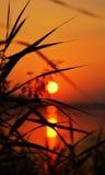 sun Fotografering för Bildbyråer