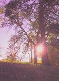 The Sun aangezien ik omhoog de Heuvel loop Stock Afbeelding
