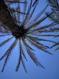 Sun above the palm tree Crete Stock Photo