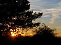 Sun-acima na duna Imagem de Stock