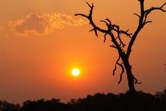 Sun africano Immagini Stock Libere da Diritti