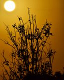 Sun ajustou-se de meu telhado! Silhueta de uma árvore Fotos de Stock Royalty Free
