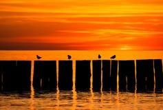 Sun ajustou-se pelo mar Fotos de Stock Royalty Free