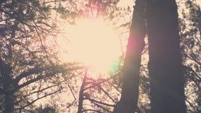 Sun alarga-se através das árvores filme
