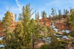 Sun a allumé des arbres chez Bryce Canyon National Park Photos libres de droits