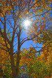 The Sun łamania though spadku czasu osiki Obraz Stock