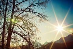 Sun-Anbetern Lizenzfreie Stockbilder