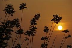 Sun aparece atrás de uma árvore fotos de stock