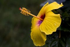 Sun asteca Imagem de Stock Royalty Free