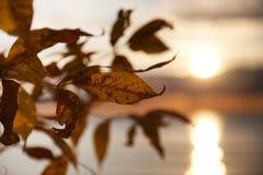 Sun astratto Fotografia Stock Libera da Diritti